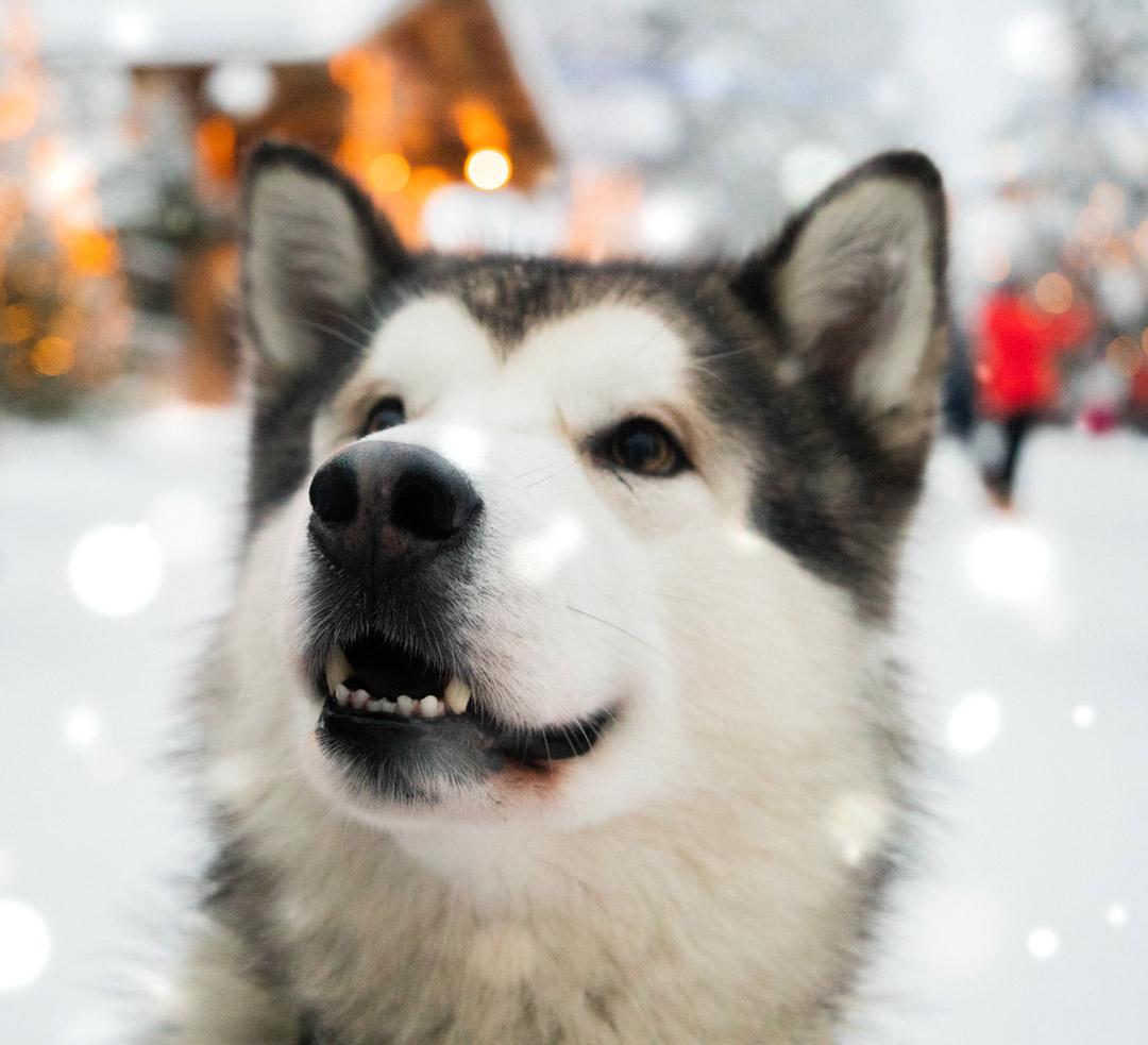 Rovaniemi Papa Noel y trineos de husky